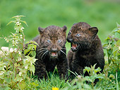 LEP 30 GL0001 01