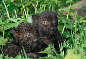 LEP 30 GL0004 01