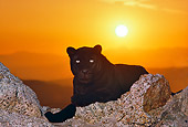 LEP 30 RK0153 01