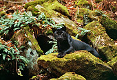 LEP 30 RK0190 10