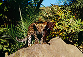 LEP 30 RK0218 03