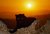 LEP 30 RK0240 36