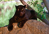 LEP 30 RK0265 01