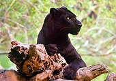 LEP 30 RK0266 01