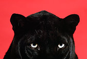 LEP 30 RK0056 02
