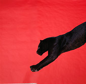 LEP 30 RK0066 04