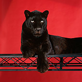 LEP 30 RK0072 14