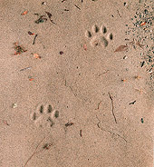 LEP 30 RK0076 02