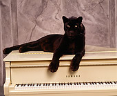 LEP 30 RK0096 53