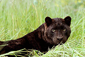 LEP 30 RK0129 14