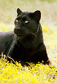 LEP 30 RK0130 64