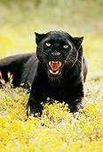 LEP 30 RK0131 06