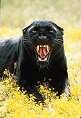 LEP 30 RK0131 49
