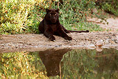 LEP 30 RK0142 30