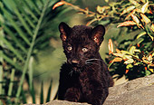 LEP 30 RK0211 24