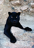 LEP 30 RK0232 66