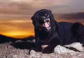 LEP 30 RK0242 08