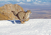 LEP 40 GL0001 01
