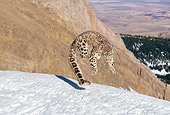 LEP 40 GL0002 01