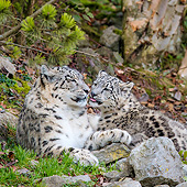 LEP 40 KH0006 01