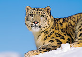 LEP 40 RK0142 04