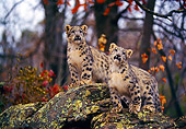 LEP 40 RK0261 01