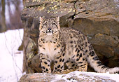 LEP 40 LS0001 01