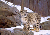 LEP 40 LS0002 01