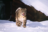 LEP 40 RF0002 01