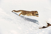 LEP 40 RK0001 14