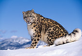 LEP 40 RK0115 01