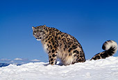 LEP 40 RK0115 02