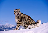 LEP 40 RK0115 04