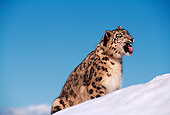 LEP 40 RK0120 04