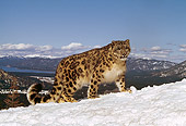LEP 40 RK0144 02
