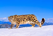 LEP 40 RK0145 02