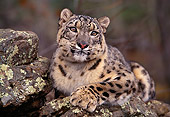 LEP 40 RK0169 07