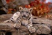 LEP 40 RK0190 03