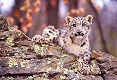 LEP 40 RK0199 03
