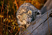 LEP 40 RK0201 01