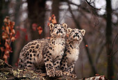 LEP 40 RK0222 05