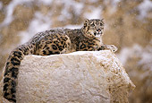 LEP 40 TL0003 01