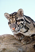 LEP 50 RK0001 01