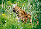 LEP 60 GL0001 01
