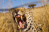 LEP 60 JZ0007 01