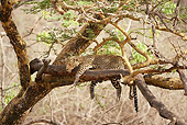LEP 60 MC0004 01