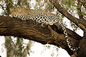 LEP 60 MC0005 01