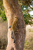 LEP 60 MC0009 01