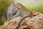 LEP 60 MC0011 01