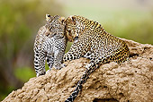 LEP 60 MC0012 01